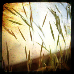 When I had you / Dok sam te imao (Gordana AM) Tags: wild sky orange inspiration ontario canada texture nature grass outdoors movement poetry whisper memories meadow talk memory nd windsor grasses dust noise speak pero splendor understand layered luminosity zubac ttv poezija withwords abigfave aplusphoto theunforgettablepictures narandzasta textures4layers lepiafgeo articulateimages multimegashot atqueartificia poemsiphotographed doksamteimao