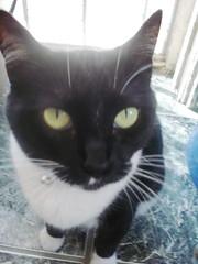 EN CASA (Gioser_Chivas) Tags: cat gato felino mascota