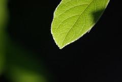 feliu ventura:el que diuen els arbres