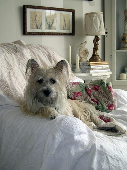 Renoir Relaxing...