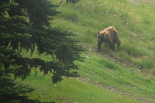 Yes, there was a bear