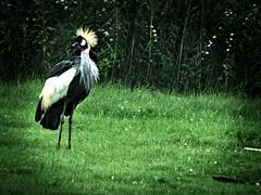 lomo bird