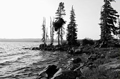 Waldo Lake Shoreline (Zack Mensinger) Tags: camping lake water oregon waves nationalforest canon10d 2008 waldolake willamettenationalforest naturalareas lakesurface