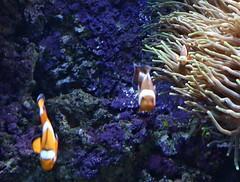 24 - 236c - top (scambigol) Tags: fish lisbon acquarium