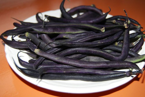 paarse bonen 002