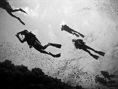Underwater Space Invaders (javiy) Tags: sky upload underwater redsea egypt bubbles scuba selection images cielo getty submarino submarinas explored sd870 wpdc17