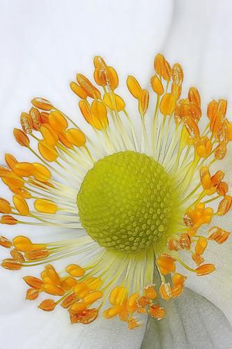 White flower #3 phart