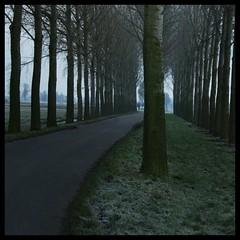 Country road (Niquitin) Tags: road trees winter netherlands bomen nikon country nederland land weg platteland niquitin d80 heienboeicop dickbruinsma