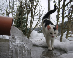 Greenhouse effect or Freezer effect????? (Xena*best friend*) Tags: pet cats frozen chats feline kitty kittens piemonte gato gatto feralcat feral richardgere richardg freezen canondigitalixus50 piedmontitaly platinumphoto anawesomeshot catsinthesnow ornerycats