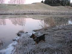IMG_3033 (Niina J.) Tags: eläimet koirat osmo
