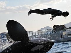 Kamogawa Seaworld by Canon PowerShot G10 (digitalbear) Tags: japan canon aquarium jump powershot chiba orca seaworld trainer kamogawa g10 momnt shutterchance