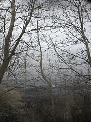 228 (fantasio4) Tags: germany landscape ir deutschland balticsea infrared rgen landschaft ostsee infrarot