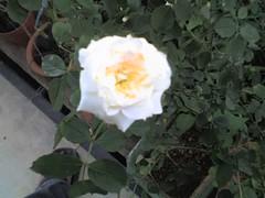 01-09-08_1731 (fikri_driftking) Tags: mohammad abang fikri