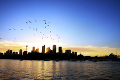 Flight of the Birds (Jacob Wighton) Tags: city seagulls birds skyline horizon sydney sydneyoperahouse gardenisland centrepointtower abigfave goldstaraward