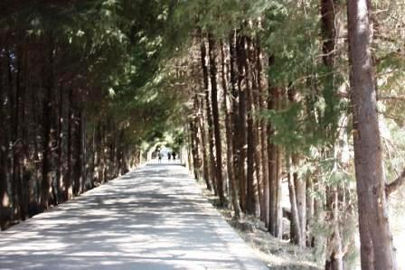 少有旅客走的麗江公路,束河古鎮與白沙壁畫…-三十而慄