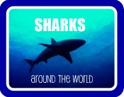 sharks around the world;