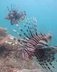 Two Lion Fish, Fim do Mundo