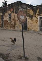 Why did the chicken cross the road, ignoring the no entry sign?