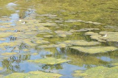 moss (courtneysmilestoo) Tags: nature murfreesboro