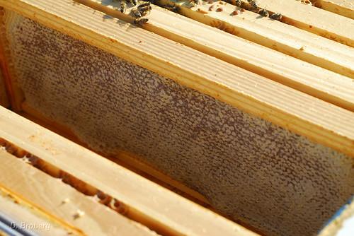 Honey Stores