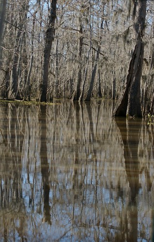 Swamp with Water Reflection
