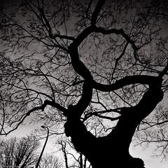 love this tree (Pierre Montoya) Tags: paris france nature french google nikon boulogne pierre hiver peter soir montoya boisdeboulogne googleimage flirk d80 furax peterfurax pierremontoya