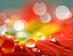 ~Drops In Happiness~ (Adettara Photography) Tags: morning shadow color macro germany happy deutschland lights droplets focus waterdrop dof bokeh january drop pearl primula 2009 soe jewel primrose vulgaris bokehparty canonef100mmf28macrousm explore57 gol