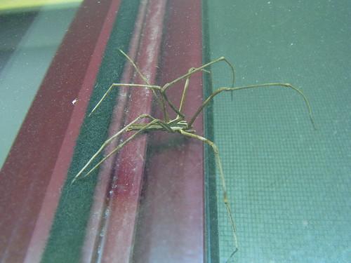 Spider 1of3