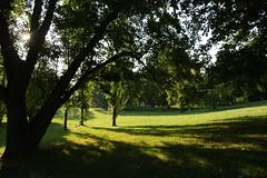 morning sun (diwan) Tags: city trees green nature canon germany geotagged deutschland eos place natur magdeburg stadt grn landschaftspark baum 2011 saxonyanhalt sachsenanhalt canoneos450d klosterbergegarten geo:lat=52114646 geo:lon=11632274