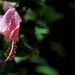 Madagascar Ankanin'Nofy Palmarium fleur