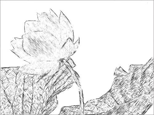 Lotus Flower Sketch Black White DSCN8132v1 Lotus Flower Sketch