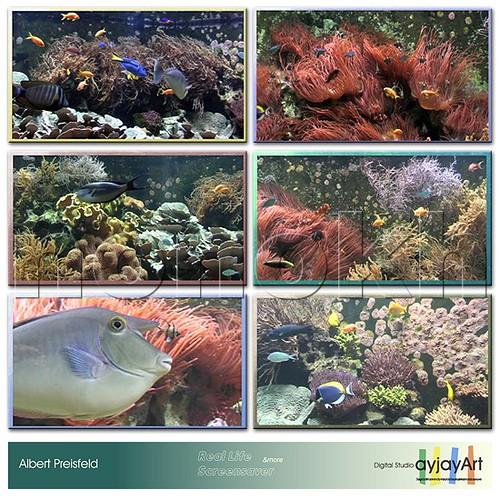 Aquarium Real Life 6