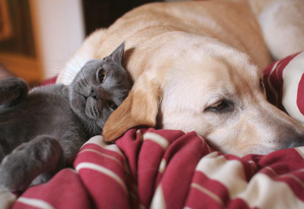 Perrito labrador maltratado (para tomar conciencia)