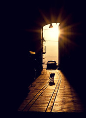 goodbye (Olivier Jules) Tags: orange sun car cat walk myspace ring explore favourites jules goodbye deviantart gatto olivier facebook addio addii favoriti aplusphoto anxanum