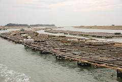 隨處可見的蚵架,是七股潟湖最常見的景象。