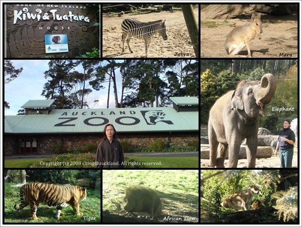 Auckalnd Zoo