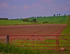 Red Gate to Red Field (billtam) Tags: uk blue trees red sky colour green june clouds canon landscape scotland gate hills fields coldstream goldenglobe scottishborders 400d aplusphoto colourartaward