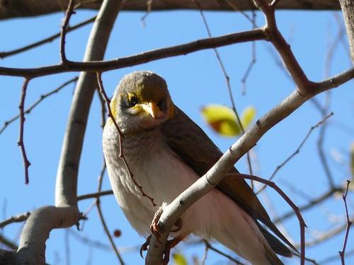 Australie #24 : oiseau