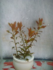 Thủy Sinh Tuấn Anh-Chuyên cây & Rêu Thủy Sinh, Cá Cảnh Biền & Hồ Cá Cảnh Biển - 6