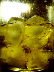 Scotch Whisky on the rocks (Animal Photo) Tags: thebestyellow