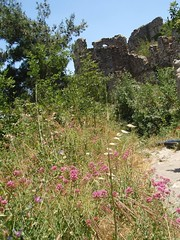 Byzantine ruins with wildflowers (steven_and_haley_bach) Tags: flowers flower wildflowers wildflower byzantine mystras sixthday mistras greecevacation byzantineruins