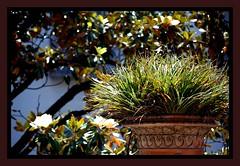 Neoclassicismo (pure troppo) (iana) Tags: napoli ortobotanico simplyflowers digitalcameraclub mimamorflowers detallessculpturalandaechitecturaltreasures