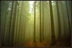 Nebelweg nach Hömel - misty way to Hömel