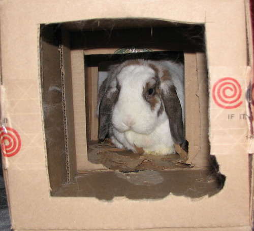 betsy through the box
