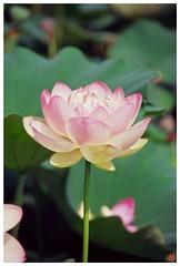 Lotus 20080712 #05