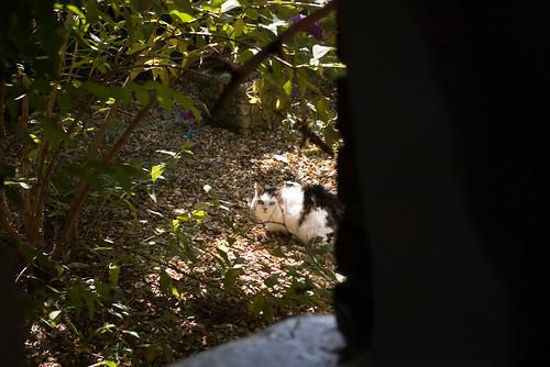 voyeur du jardin