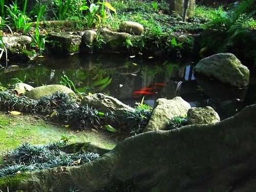 林家花園-根、魚池和倒影