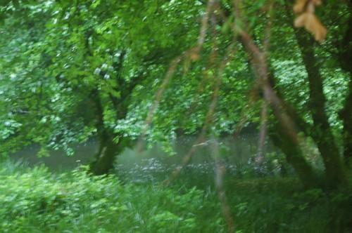 Mosquito Swamp