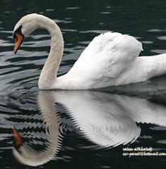 reflections (alkhaledi) Tags: reflections
