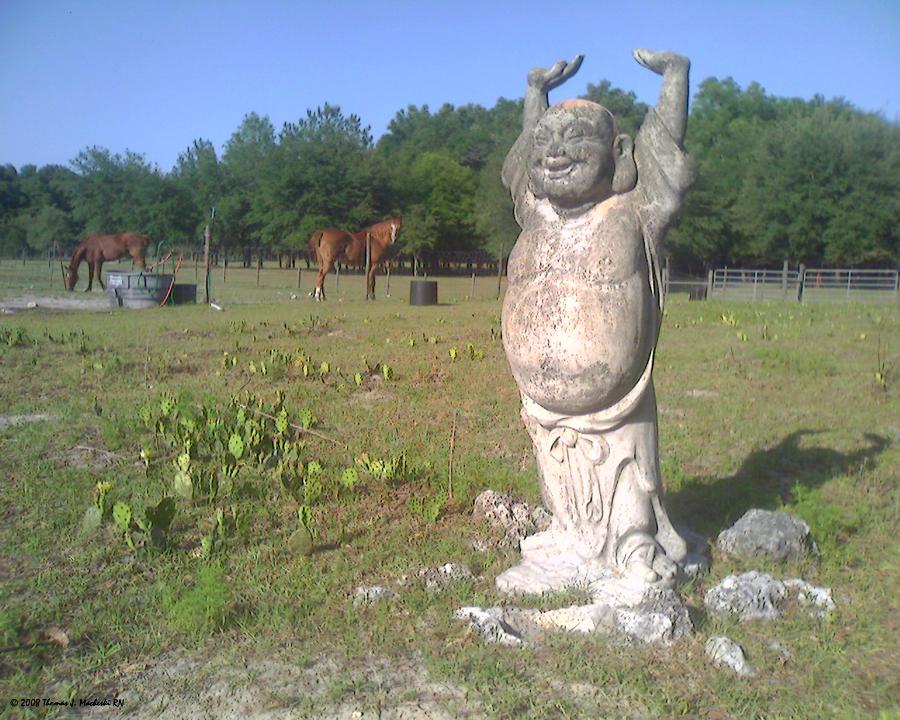 Hotai & teh Horses